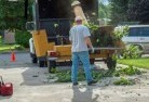 Alkimos Tree cutting services 13