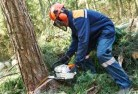 Alkimos Tree cutting services 21
