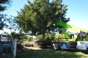 Kwikfynd Tree Management Services